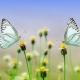 Kelebek Çiftliği Okul Gezisi