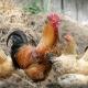 Kıbrıs Eko-Agro Okul Gezisi